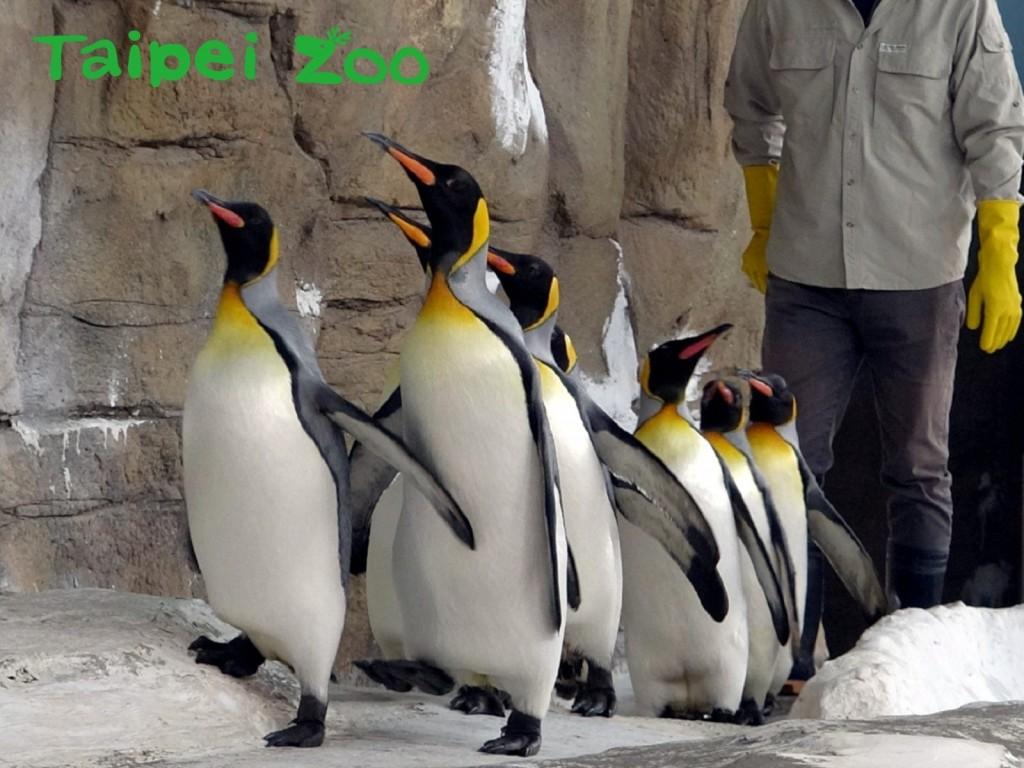 臺北市立動物園提供。