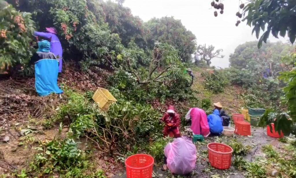 【南台灣豪雨】全台農損1644萬、屏東最多 國稅局:民眾及企業災損30天內申請可抵稅