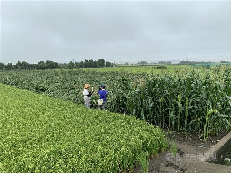 Torrential rain causes millions in agricultural losses in Taiwan