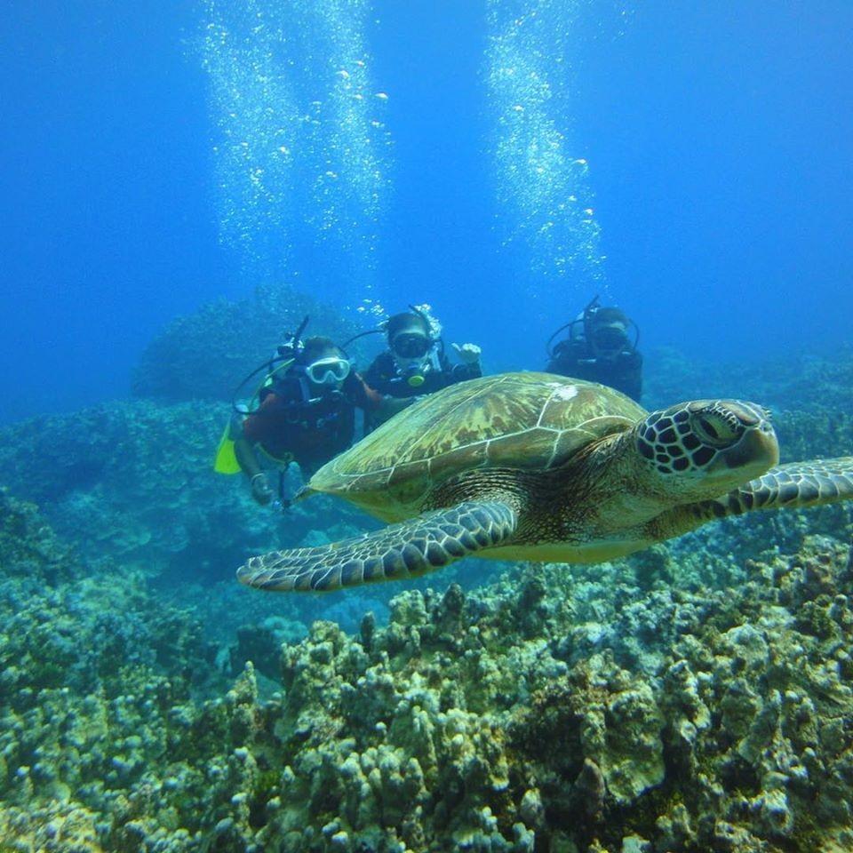 圖片取自《Visit Guam 關島觀光局》臉書粉絲專頁。