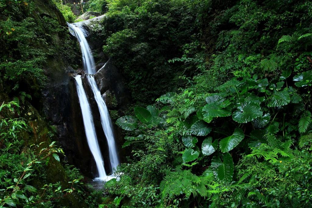 照片由林務局提供