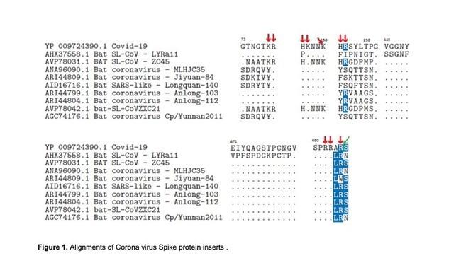 Norwegian virologist claims coronavirus is 'chimera' made in Chinese lab