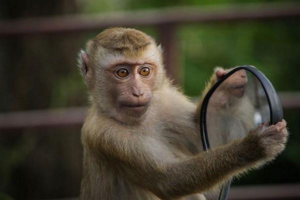 Alcohol-addicted monkey received 'life sentence'in India. (Pixabay photo)