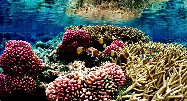 Coral reefs believed to have highest biodiversity of any ecosystem on planet