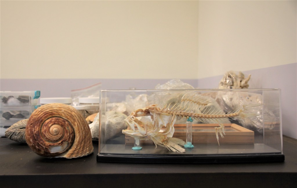Some of Lin Chien-hsiang's specimens and fossils