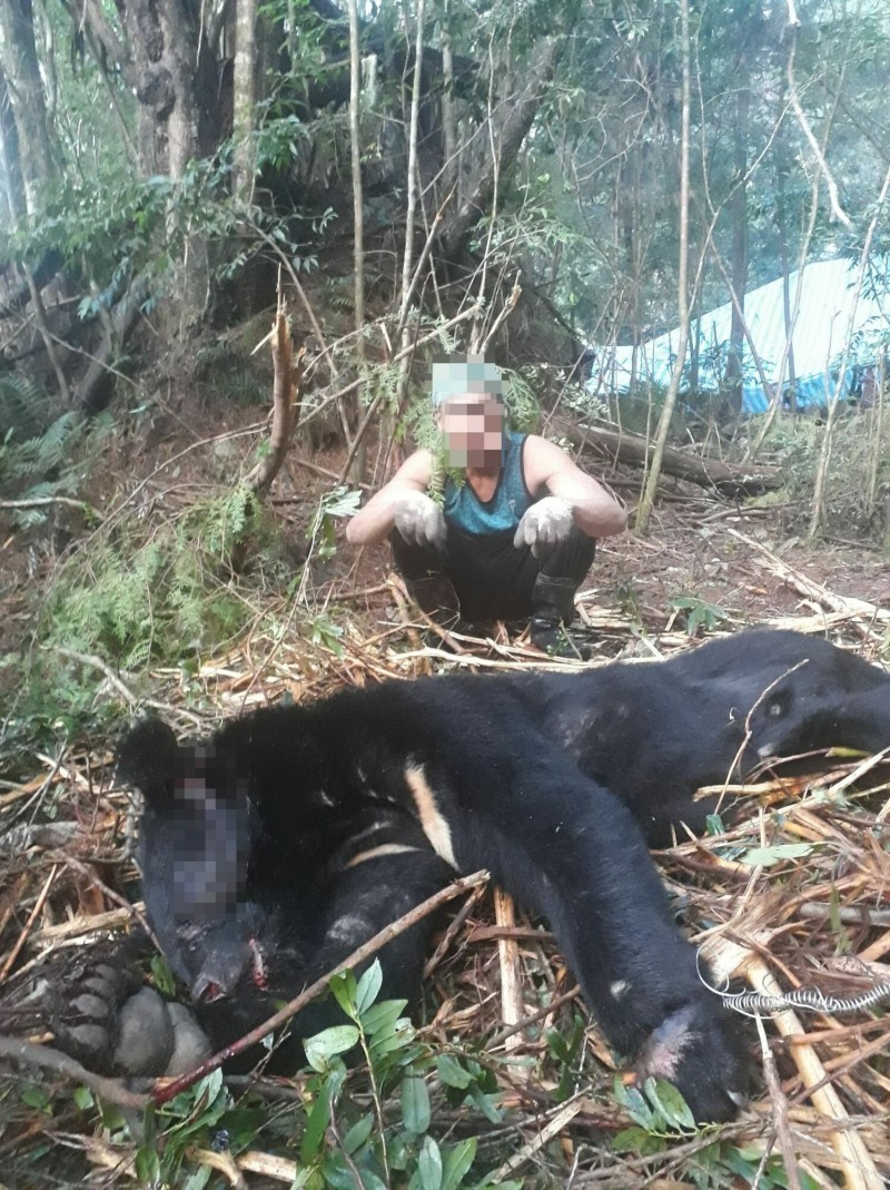 Timber thief arrested for killing Taiwan's endangered black bear