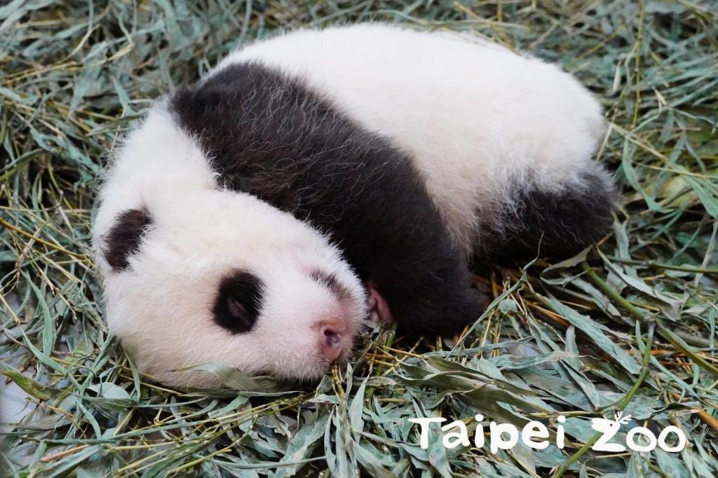 (圖/ 台北市立動物園提供)
