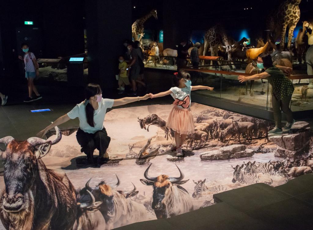 奇美博物館再度於三大常設展廳開創新體驗(圖/奇美博物館)