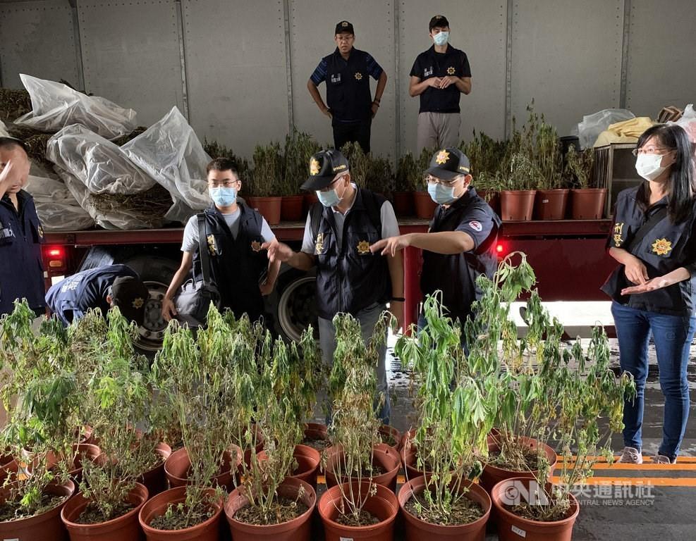 Total of 1,361 marijuana plants were seized last month.