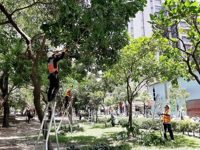 照片來源:新北市政府綠美化環境景觀處提供