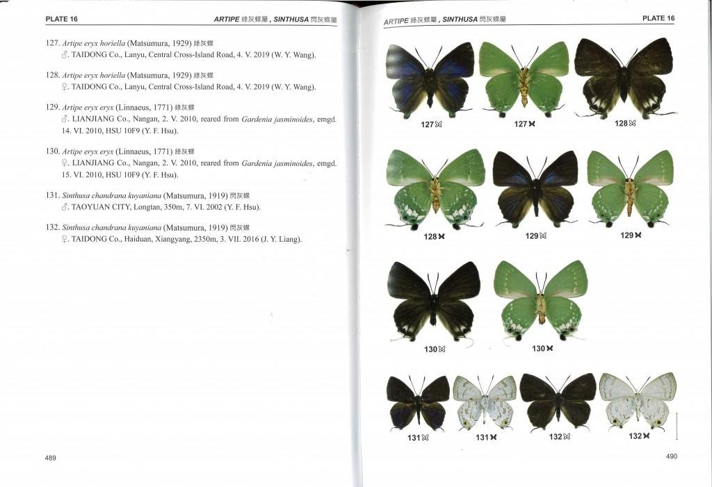 讓世界看見台灣蝶類誌 第四部曲—灰蝶科隆重出版