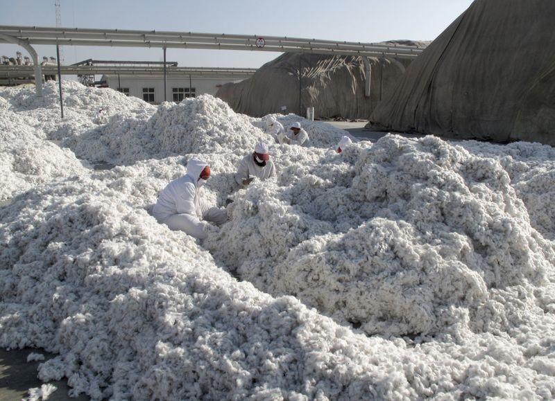 中國拘禁新疆少數民族的人身自由,並要求他們從事各種重度勞動,美國因此擬制定棉料禁令,對中國採取施壓行動。(圖/路透社)