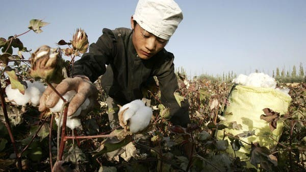 Young worker picks raw cotton in Korla, Xinjiang.