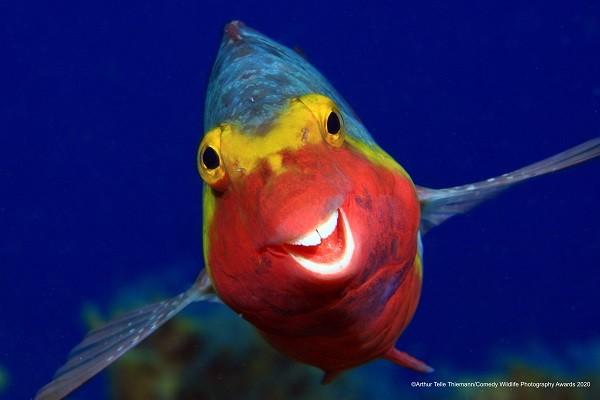 ©Arthur Telle Thiemann Smiley / Comedy Wildlife Photo Awards 202...