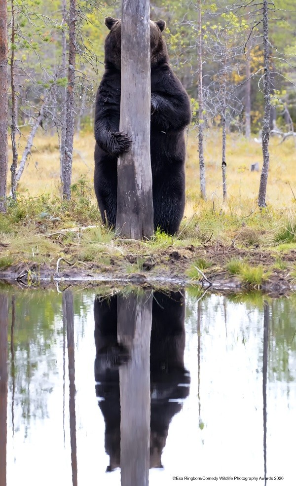「2020搞笑野生動物攝影獎」入圍作品搶先看 獲獎名單10月22日公布