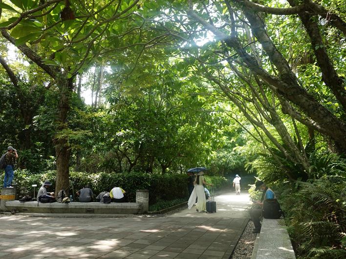 夏日午后在台北植物園樹蔭下悠閒乘涼的民眾。(照片由林業試驗所提供)