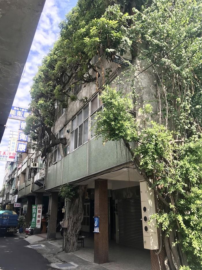 與百年榕樹共存的透天厝, 位於彰化縣彰化市中華西路的路橋旁 (中央社)