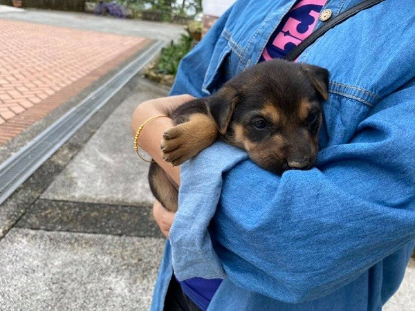 Taiwanese B&B owner finds homes for dog family