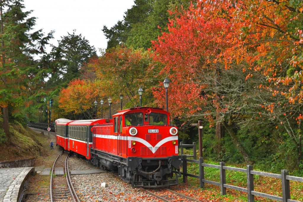 阿里山林業鐵道沿途楓紅景致。(照片由黃源明攝影 / 林務局提供)