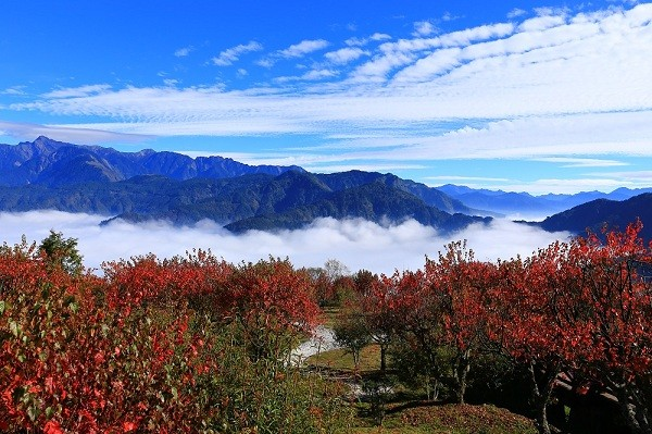 (Alishan National Forest Recreation Area photo)
