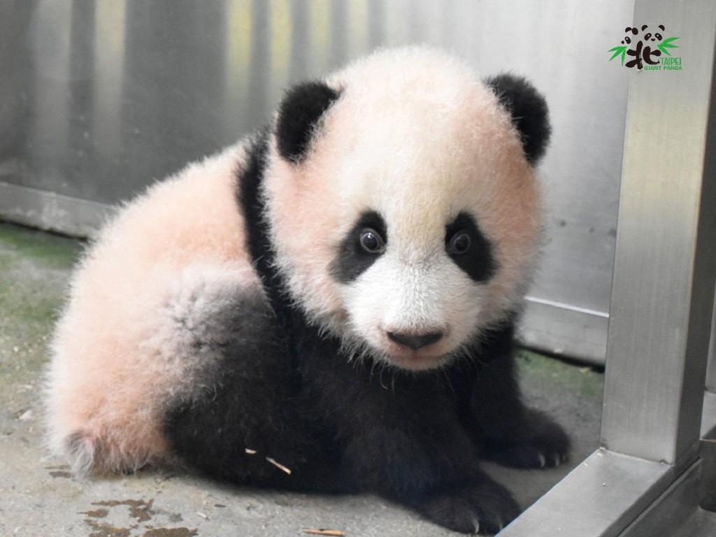 (圖/ 台北市立動物園)