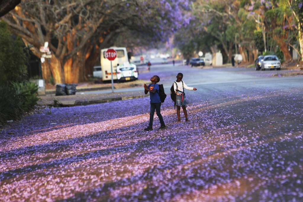 FILE - In this Friday, Oct, 11, 2019 file photo, children play underneath Jacaranda trees lining a street in the capital Harare, Zimbabwe. These Afric...