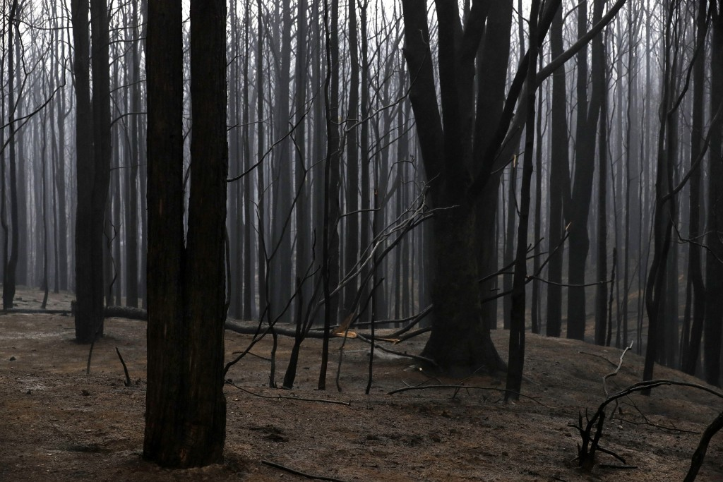 Blackened trees poke through the scorched ground after a wildfire ripped through near Kangaroo Valley, Australia, Sunday, Jan. 5, 2020. The deadly wil...