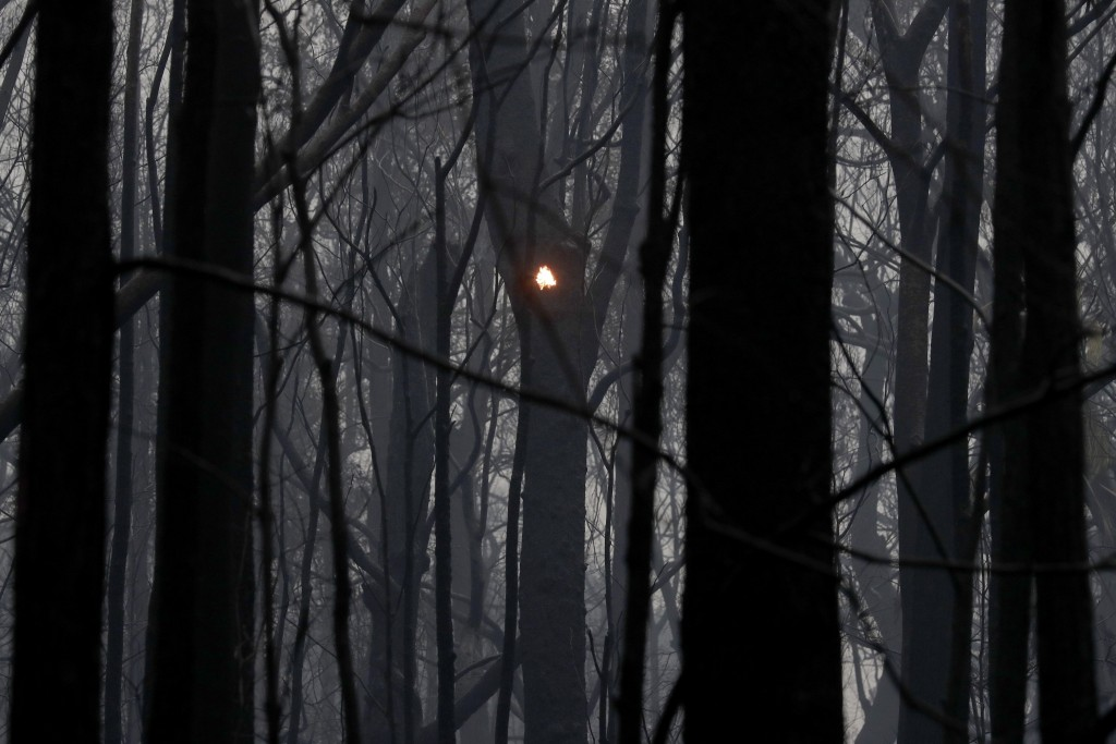 An ember burns among blackened trees after a wildfire ripped through near Kangaroo Valley, Australia, Sunday, Jan. 5, 2020. The deadly wildfires, whic...