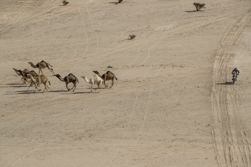Charlie Herbst of France rides his KTM motorbike next a herd of camels during stage two of the Dakar Rally, between Al Wajh and Neom, Saudi Arabia, Mo...