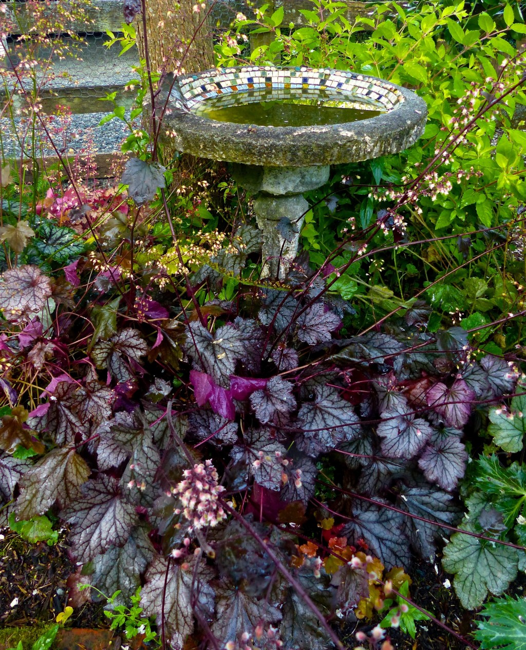 This June 15, 2015 photo shows some different varieties of Huecheras growing around a birdbath and split rail fence near Langley, Wash. Plants with re...
