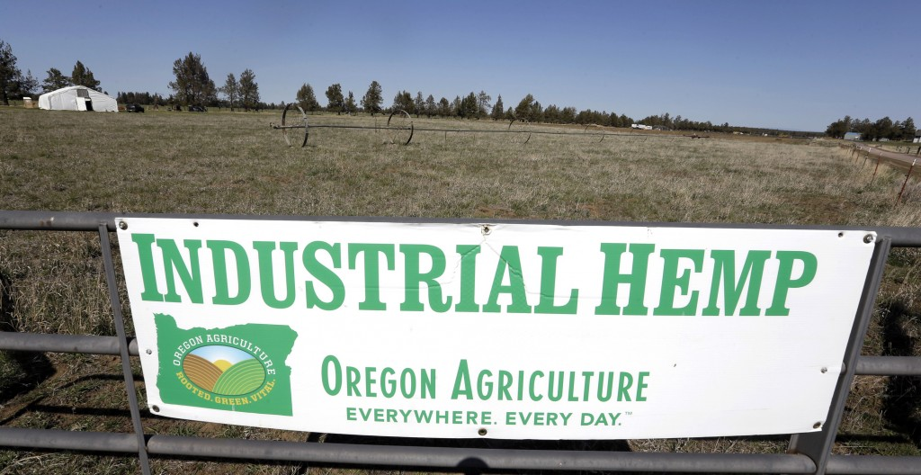 FILE - In this April 23, 2018, file photo, a sign designates the type of crop grown in a field as it stands ready to have another hemp crop planted fo...