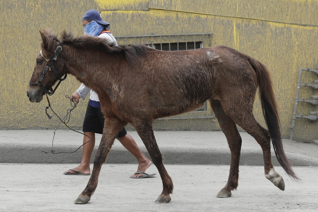 A man guides his horse after it was rescued near Taal volcano as residents evacuated to safer grounds leaving some of their pets behind in Talisay, Ba...