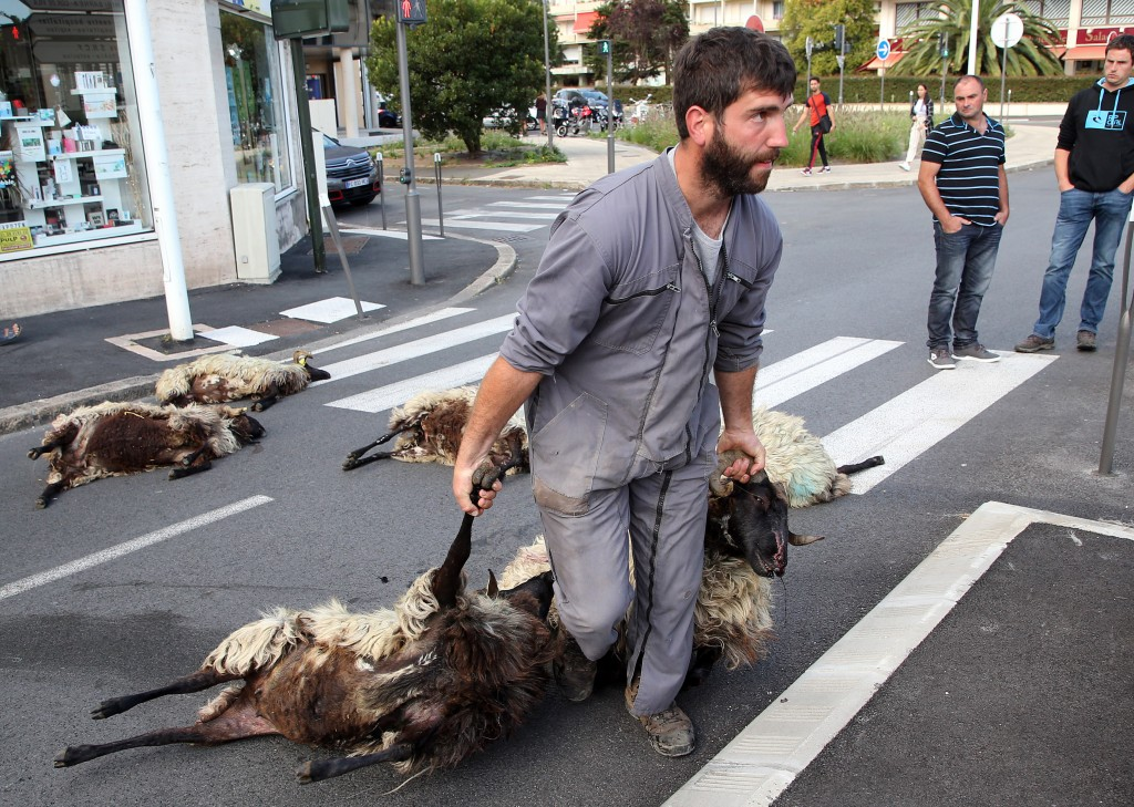 FILE - In this Sept.2, 2019 file photo, shepherd Romain Jaurigueberry brings dead sheep to sub-prefecture of Bayonne, southwestern France, to protests...