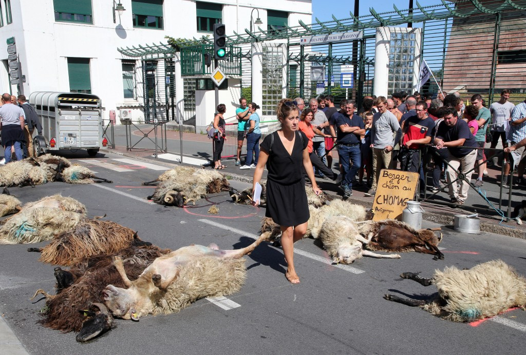 FILE - In this Sept. 2019 file photo, a woman walks among dead sheep, after farmers protesting against the rising bears attacks on sheep herds in Pyre...