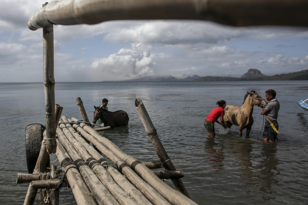 In this Jan. 14, 2020, photo, men clean their horses that they rescued from Taal volcano island in Balete, Batangas province, southern Philippines. So...