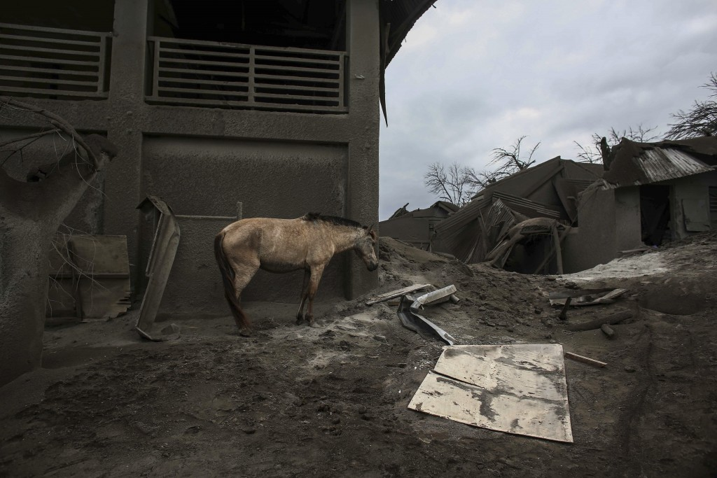 In this Jan. 14, 2020, photo, a horse stands next to damaged structure at the Taal volcano island in Talisay, Batangas province, southern Philippines....