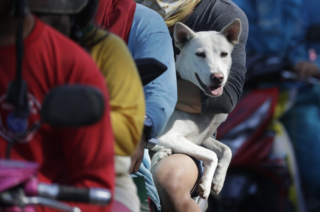 A dog waits in line with his owner as authorities enforced total evacuation of residents living near Taal volcano in Agoncillo town, Batangas province...