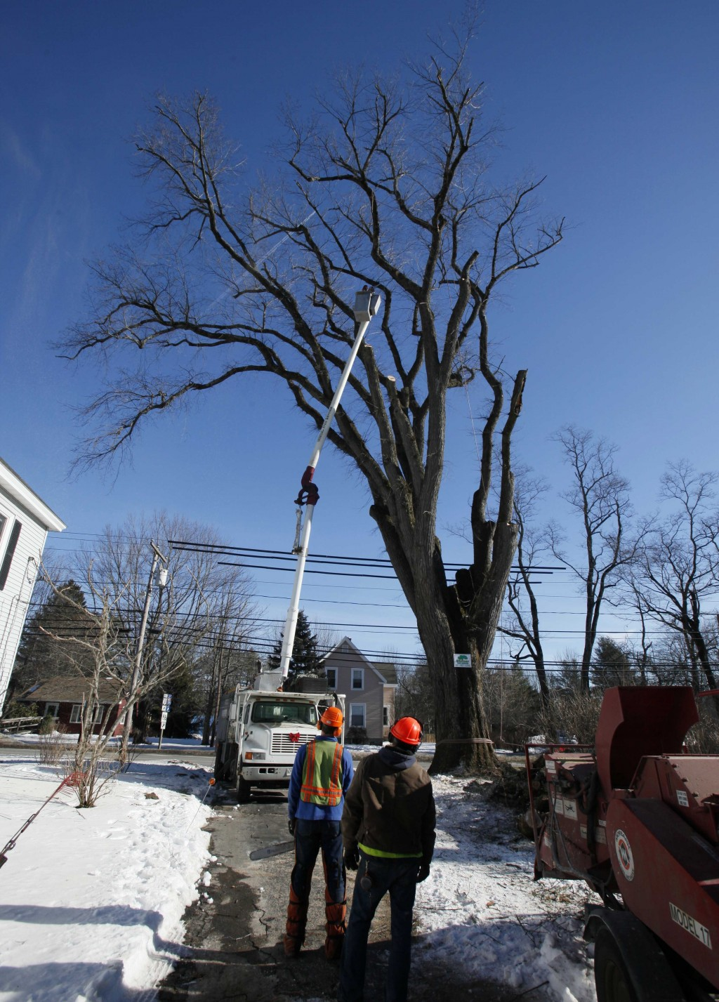 FILE - In this Jan. 14, 2010 file photo, an arborist in a cherry picker cuts limbs from a massive elm tree, nicknamed Herbie, in Yarmouth, Maine. The ...
