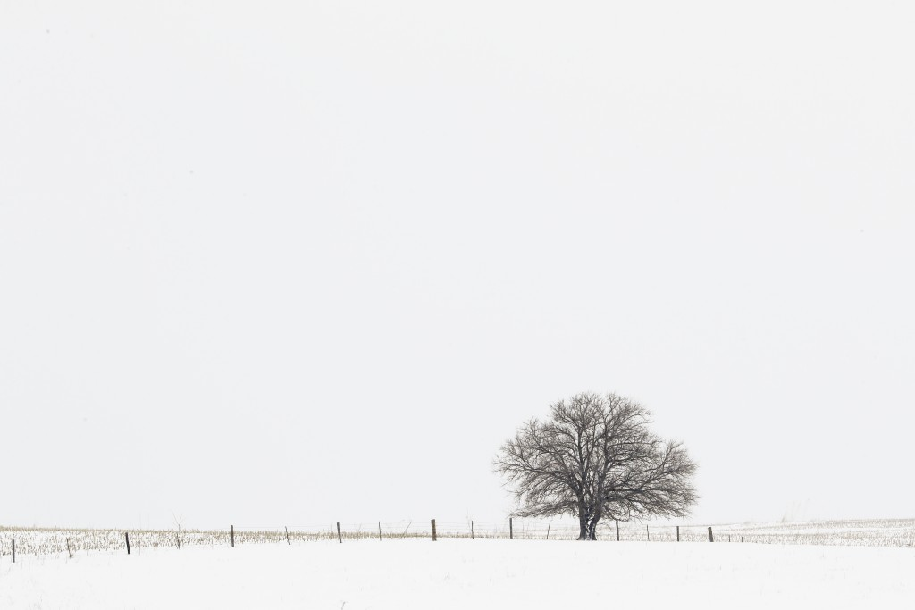 In this Jan. 24, 2020, photo, a barren tree stands alone on a farmer's snow covered field in Van Meter, Iowa. (AP Photo/Matt Rourke)