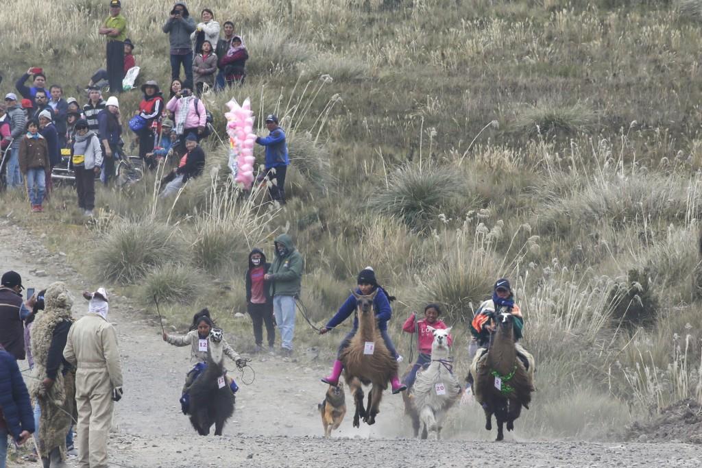 Children race llamas at the Llanganates National Park, Ecuador, Saturday, Feb. 8, 2020. Wooly llamas, an animal emblematic of the Andean mountains in ...