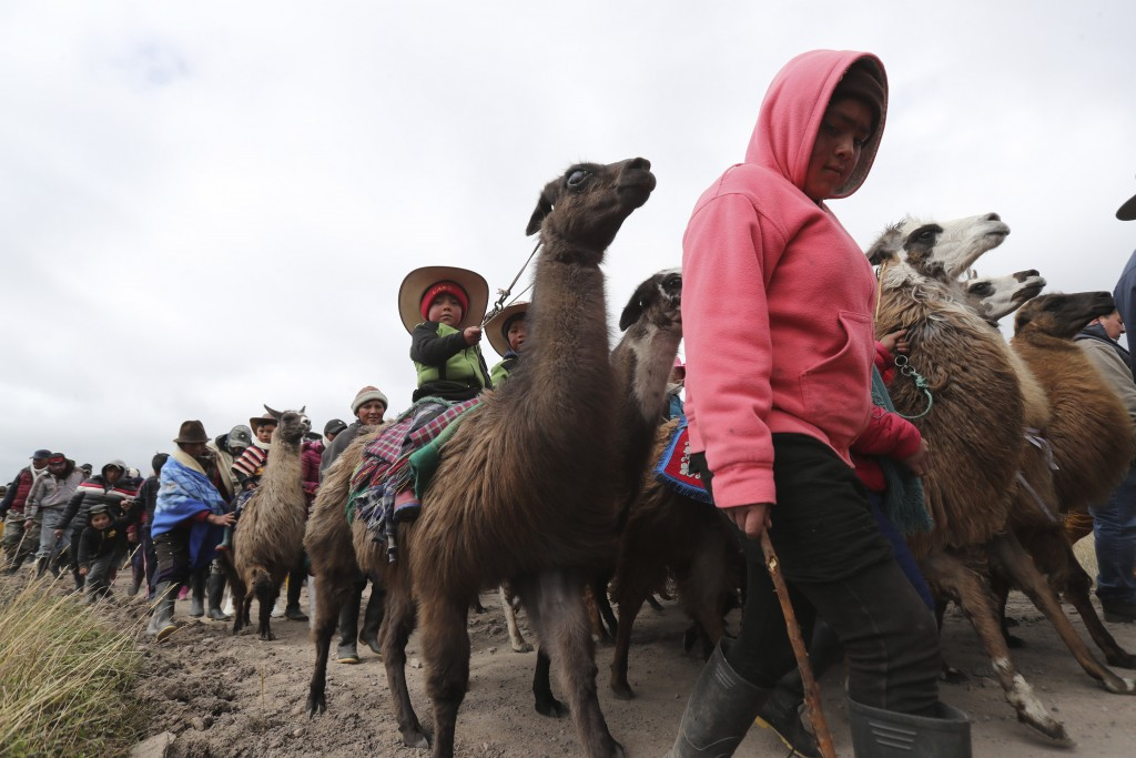 Children arrive with their families for llama races at the Llanganates National Park, Ecuador, Saturday, Feb. 8, 2020. Wooly llamas, an animal emblema...