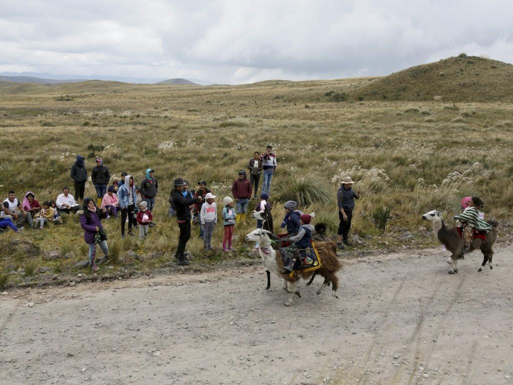 Children ride their llamas at the Llanganates National Park, Ecuador, Saturday, Feb. 8, 2020. Wooly llamas, an animal emblematic of the Andean mountai...