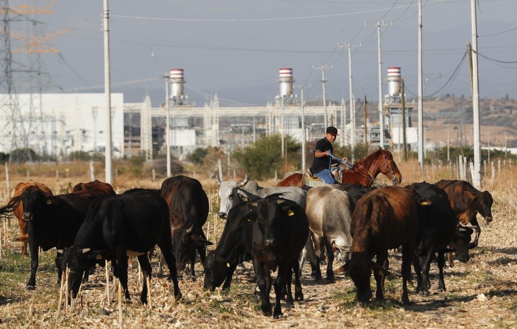 """A farmer grazes his cattle near the anewly built power generation plant near Huexca, Morelos state, Mexico, Saturday, Feb. 22, 2020. Huexca means """"pla..."""