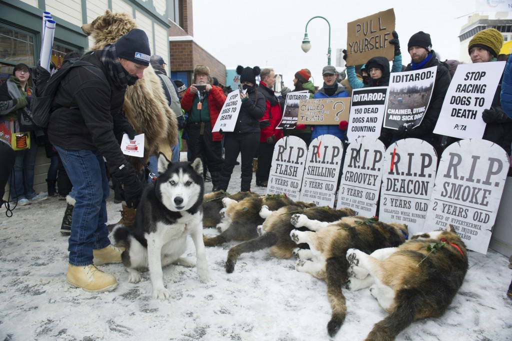 FILE - In this March 3, 2018, file photo, Anchorage resident Terry Fischer, with his Alaskan Husky Litho, happens into the People For the Ethical Trea...