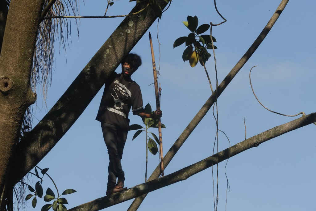 A Guarani Mbya indigenous youth stands in a tree as his tribe waits for police to enter the property they have been occupying for just over a month in...