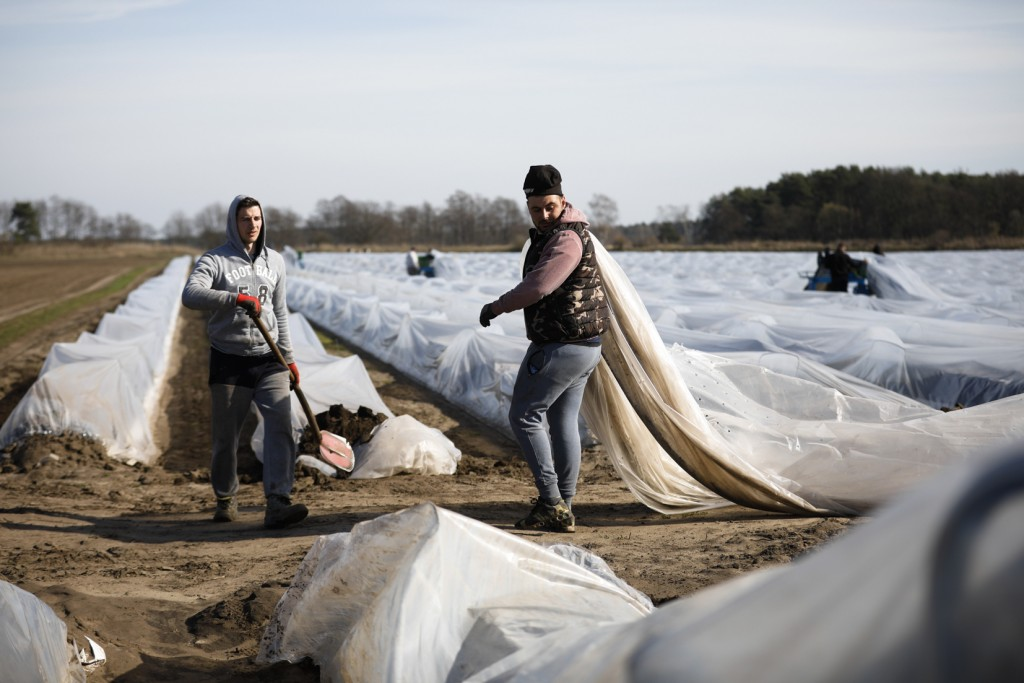 Seasonal workers from Rumania harvest asparagus on a field of farmer Henning Hoffheinz near Genthin, Germany, Wednesday, March 18, 2020. Last year, Ge...