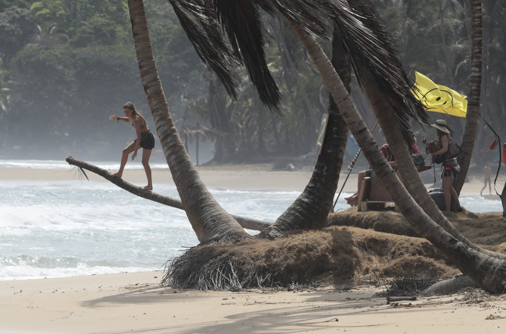 A woman balances on a palm trunk at the end of the annual Tribal Gathering on Playa Chiquita, Panama, Wednesday, March 18, 2020. Foreigners attending ...