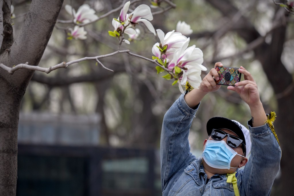 A visitor wearing a face mask takes a photo of blossoms at the Beijing Zoo after it reopened its outdoor exhibit areas to the public for the first tim...