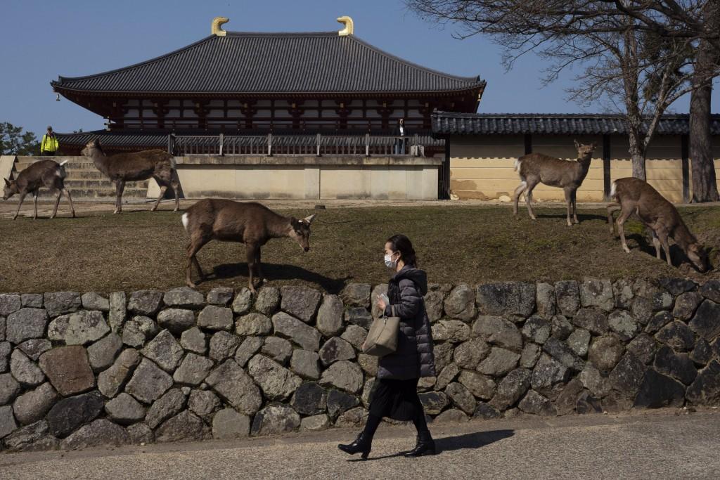 A woman walks past deer grazing on the lawn of Kofukuji temple in Nara, Japan, Tuesday, March 17, 2020. (AP Photo/Jae C. Hong)