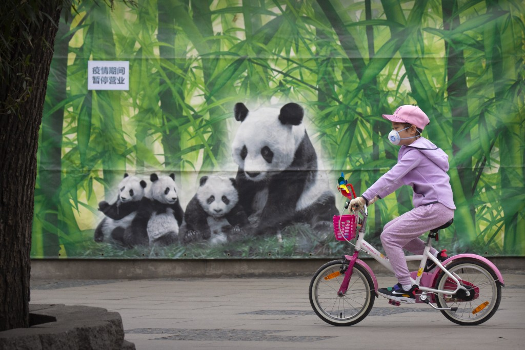 A girl wearing a face mask rides a bicycle past a mural of giant pandas at the Beijing Zoo after it reopened its outdoor exhibit areas to the public f...
